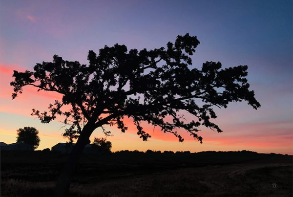 Photo of black silhouetted tree against a pink and blue sunset